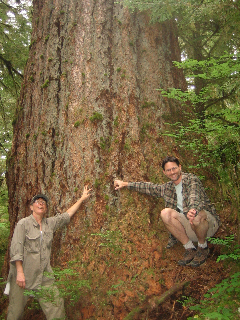 Aaron Lesan and Dianne Roth  give scale to a giant Douglas fir